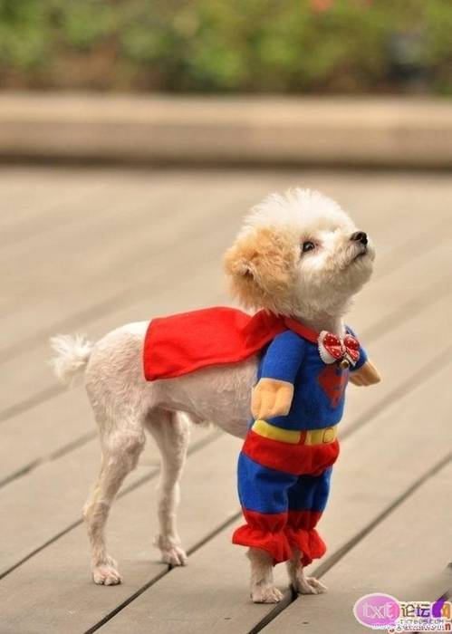 Cute Dog Halloween Costumes: You Will Believe A Dog Can Fly