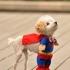 dog-cosplay-1.jpg