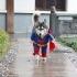 dog-cosplay-2.jpg