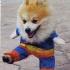 dog-cosplay-4.jpg