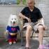 dog-cosplay-5.jpg