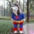 dog-cosplay-6.jpg