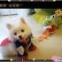 dog-cosplay-7.jpg