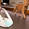 SureFeed Microchip Pet Feeder Keeps Your Cat From Getting Too Fat