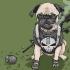 Josh-Lynch-Dog-Punisher-686x444.jpg