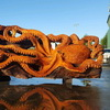 Fallen Redwood Carved Into Beautiful Octopus
