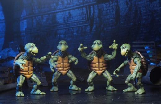 54064-Baby-Turtles1-1024x664.jpg