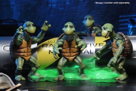 54064-Baby-Turtles2-1024x683.jpg
