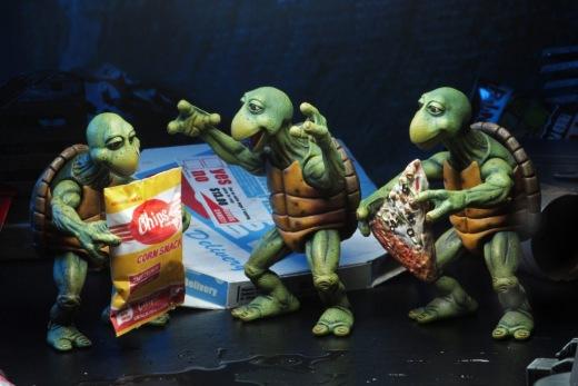 54064-Baby-Turtles5-1024x683.jpg
