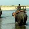 Some Happy News - Elephants Save 600 Humans From Floods