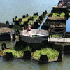 Rotterdam's Floating Trash Garden