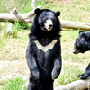 5 Moon Bears Freed From Bile Farm After 21 Years In Tiny Cages