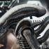 2 UPDATED_Alien_Big Chap.jpg