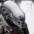 4 UPDATED_Alien_Big Chap.jpg