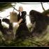thomas-jefferson-gorilla.jpg