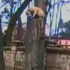 BAMF Russian Parkour Dog Makes Your Dog Look Lazy