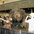 star_wars_celebration_6_106.JPG