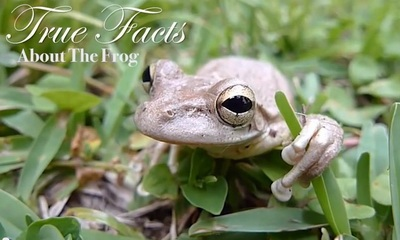 true facts about the frog_feat.jpg