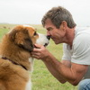 Even The Trailer For 'A Dog's Purpose' Will Make You Cry