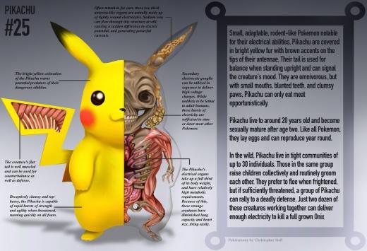 pikachu_anatomy__pokedex_entry_by_christopher_stoll-d9jp8j2.jpg