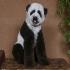poodle-panda.jpg