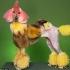 poodle-rooster.jpg