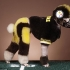 poodle-steelers.jpg