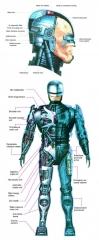robocop_anatomy.jpg