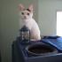 cat-tardis-5.jpg
