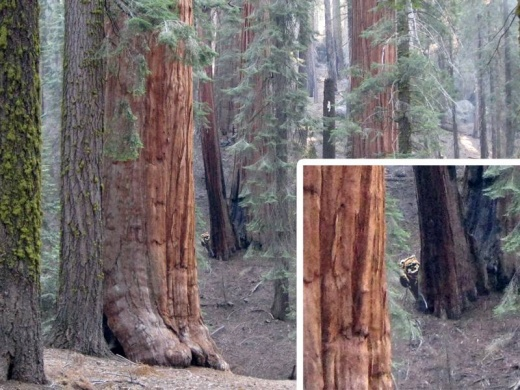 ewok_sequoia_national_park_1.jpg