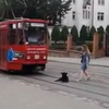How Much Does This Russian Dog Care About An Oncoming Bus?  This Much.