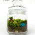 Moss Love - Mandrake 2.jpg