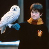 Harry Potter Plans To Show Broadway Dancers His 'Wand'