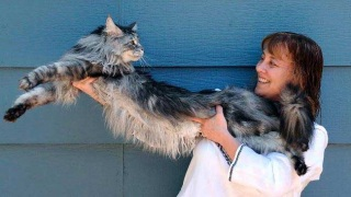 Longest cat in the world.jpg