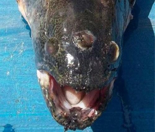 blinky-three-eyed-fish.jpg