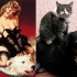 cats that look like pin-up models_11.jpg