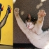 cats that look like pin-up models_13.jpg