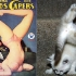 cats that look like pin-up models_17.jpg
