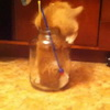 Kitty Vs Jar - Jar 1 - Kitty 0