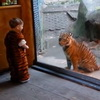 Little Boy in Tiger Costume Plays With Tiger At the Zoo