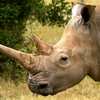 Anti-Poaching Spokesman Accused Of Killing Endangered Rhino