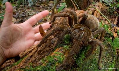 giant-spider-1.jpg