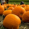 After Halloween: Don't Throw Your Pumpkins In The Garbage