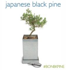 BON-BKPINE.jpg