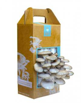 Grow your own mushroom kit.jpeg