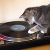 DJ Mix Master Kitty Cat Tries His Paw At Spinning Records