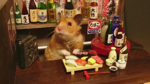 hamster-bartender-4.jpg