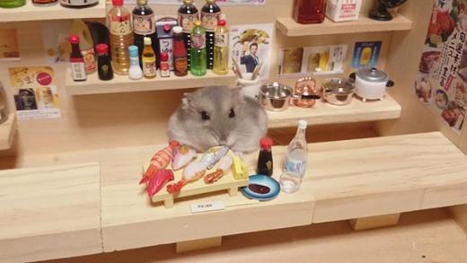 hamster-bartender-5.jpg