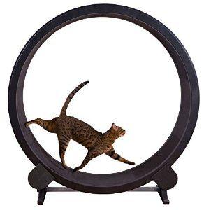onefastcat.jpg