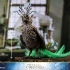 Hot Toys - Fantastic Beasts 2 - Gellert Grindelwald Collectible Figure_PR23 (Special Version).jpg